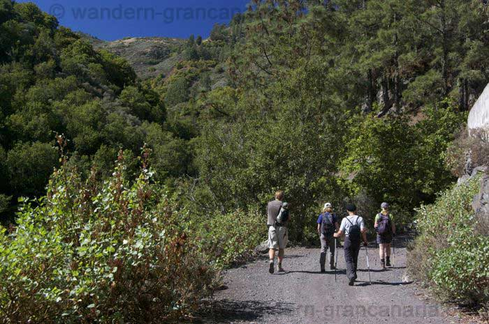 Guided hiking to the green north of Gran Canaria